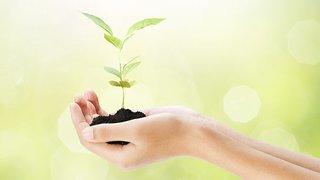 植福 イメージ 植樹