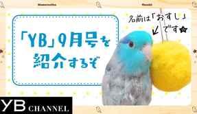 【青い鳥が1分で紹介】月刊ヤング・ブッダ(YB)2018年9月号【幸福の科学】