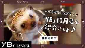 【動画】YB(ヤング・ブッダ)10月号は映画「宇宙の法―黎明編―」特集! 見どころをハリネズミが紹介【YB178号】