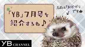 【動画】YB(ヤング・ブッダ)7月号は『太陽の法』特集! 見どころをハリネズミが紹介【YB175号】