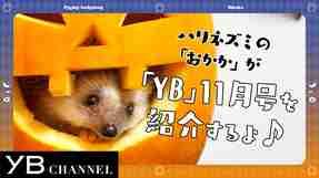 【動画】YB(ヤング・ブッダ)11月号は名文学特集! 見どころをハリネズミが紹介【YB179号】