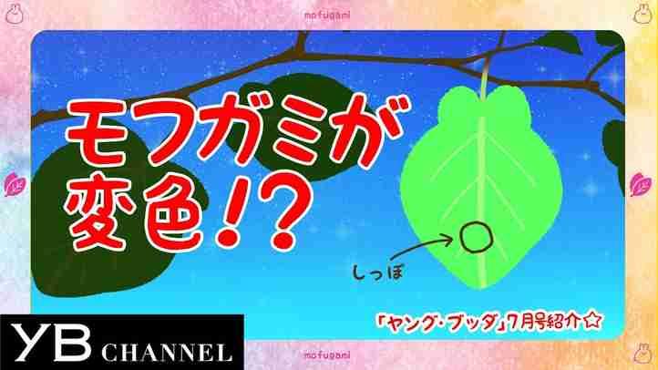 【夏といえばスピリチュアル】月刊「ヤング・ブッダ」7月号【幸福の科学】
