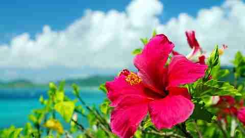 2019年6月23日(日)沖縄正心館「平和祈念の集い」のお知らせ