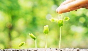 植福 発展 木 イメージ