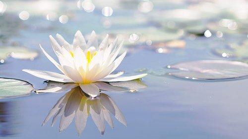 蓮の花 四正道 教え イメージ